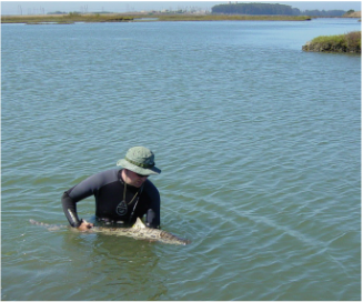 Aaron Carlisle Shark Research Marine Biology Stable Isotope Tagging Leopard Shark Elkhorn Slough Estuary
